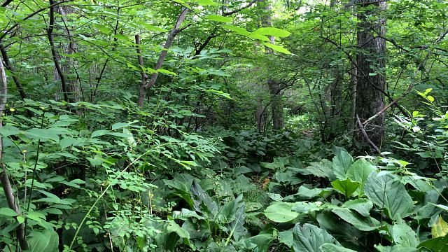 White trail hidden in the foliage