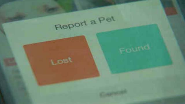 New app helps owners find their missing pets (WFSB)