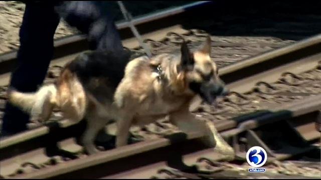 State police cadaver dogs searched along the railroad tracks in New Haven on Thursday for evidence. (WFSB)
