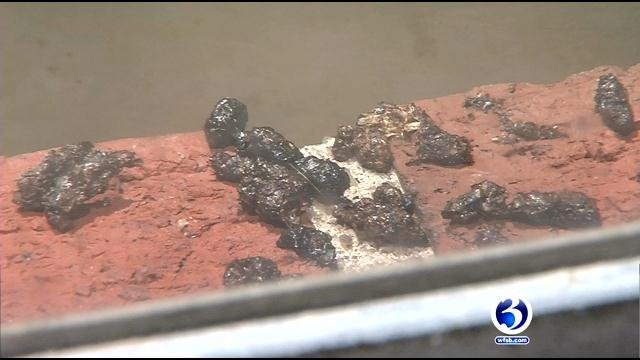 Bat droppings found in Middletown apartment. (WFSB)