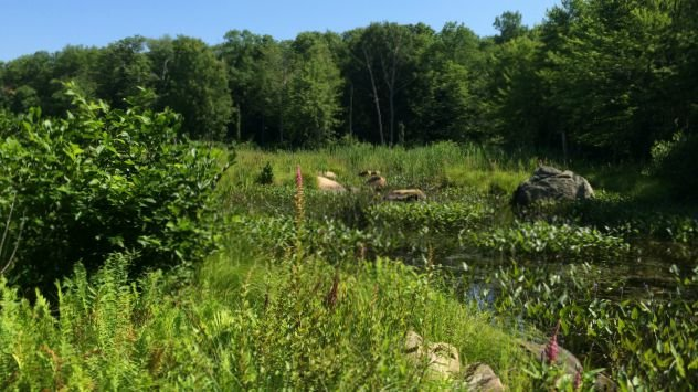 Marsh view from Sawmill Brook Preserve