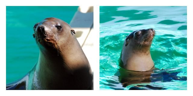 Ripley and Clara have found a new home at Mystic Aquarium. (Mystic Aquarium)