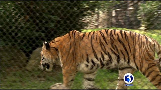 Zoo officials help animals beat the heat (WFSB)