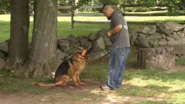 Donations sought for dogs deployed with troops (WFSB)