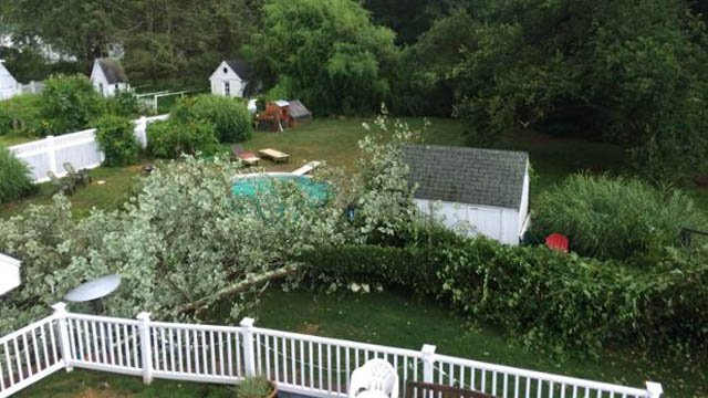This tree narrowly missed a home in Mystic. (iWitness photo)