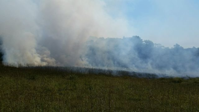 The fire marshal is trying to determine cause of brush fire in Hamden on Friday. (Hamden Fire Department)