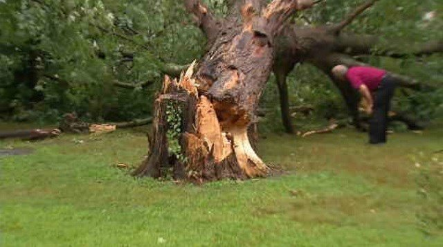 Tree falls on home on North Main Street in East Granby. (WFSB)