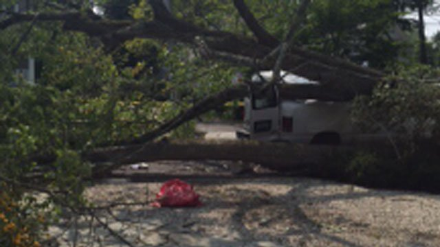 A tree fell on a contractor in Old Greenwich on Friday. (Greenwich Police Department)