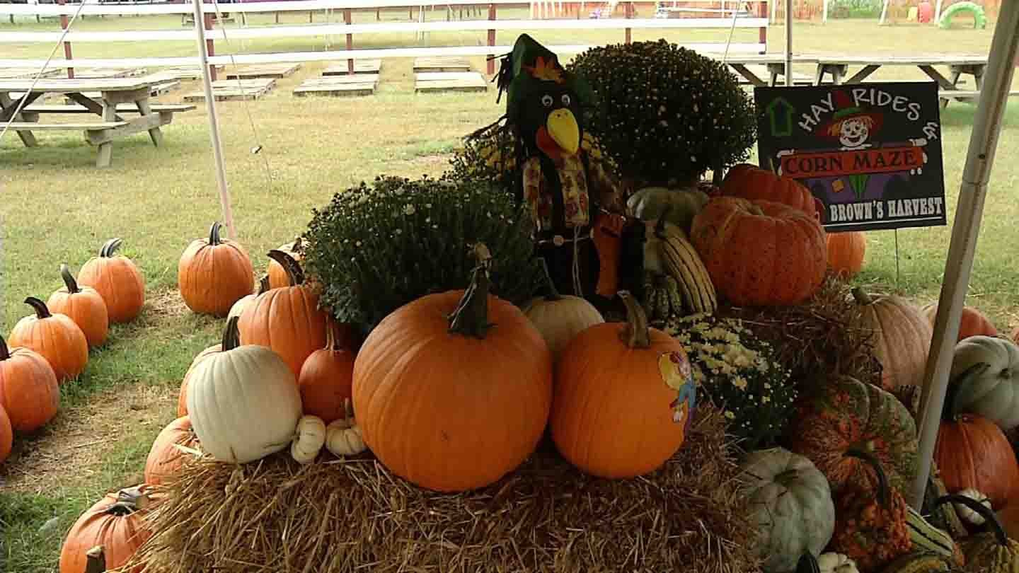 Pumpkins have ripened early in Windsor. (WFSB photo)