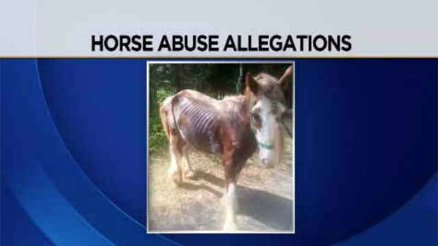 Horse abuse allegations reported in East Hampton (Submitted)
