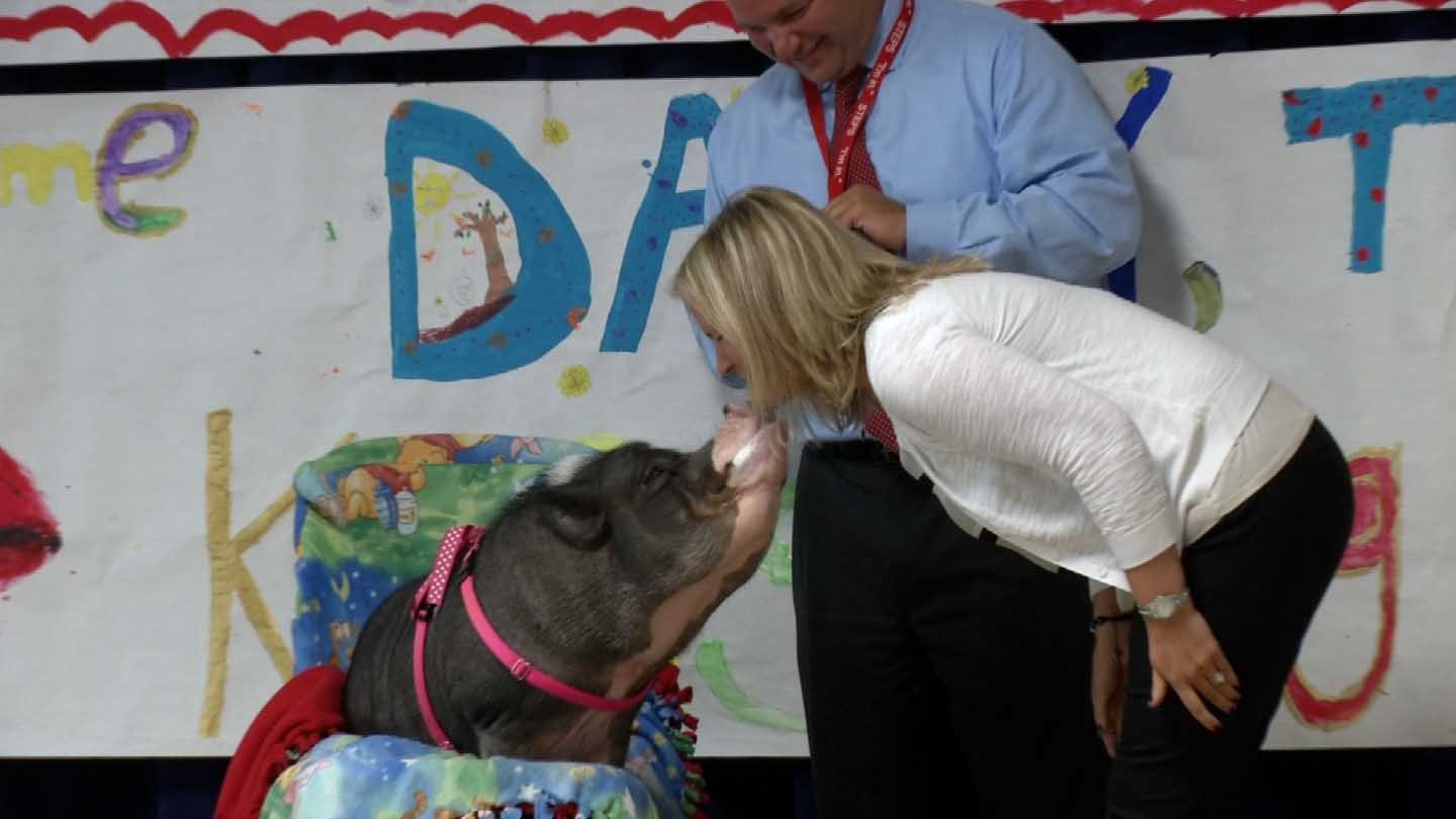 Teachers kissed a potbelly pig in Southington after their students reached a reading goal. (WFSB photo)