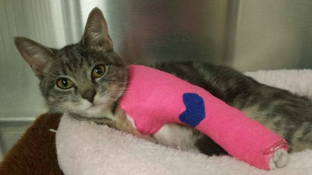 Help is needed for 4-month-old Chloe. (New London Animal Control)