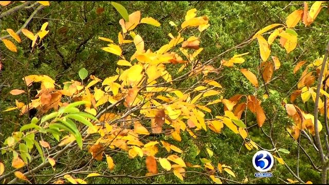 Rain helps makes the fall foliage more colorful. (WFSB)