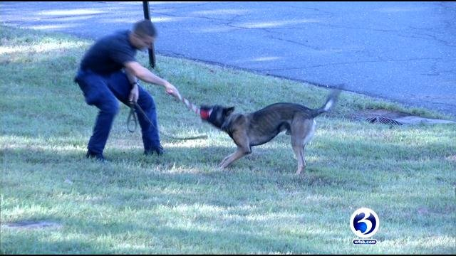 Officers trained with their K9s on Tuesday. (WFSB)