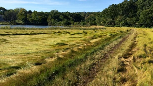 Marsh at the trailhead of Mamacoke Island