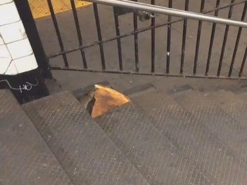 New York City rat carries pizza slice down subway stairs (Matt Little)