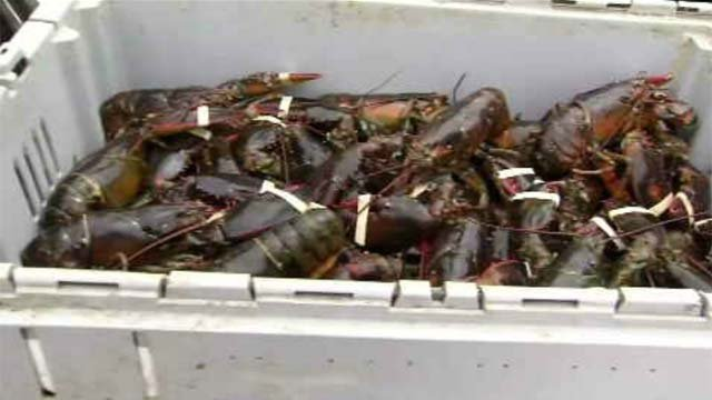 Fishermen try to preserve the lobster industry (WFSB)