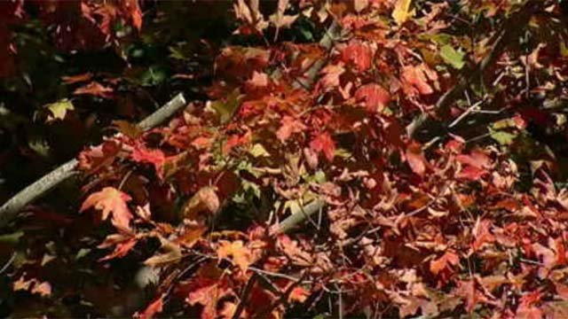 Fall season can trigger anxiety, depression (WFSB)