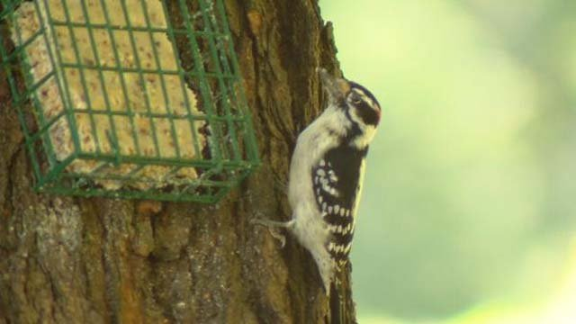 Jayne Neville has been caring for birds in her backyard on Mount Vernon Road since the mid-1990s. (WFSB)