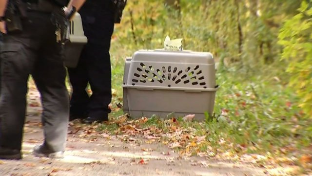 More than 50 cats were seized from a home in Wolcott. (WFSB)
