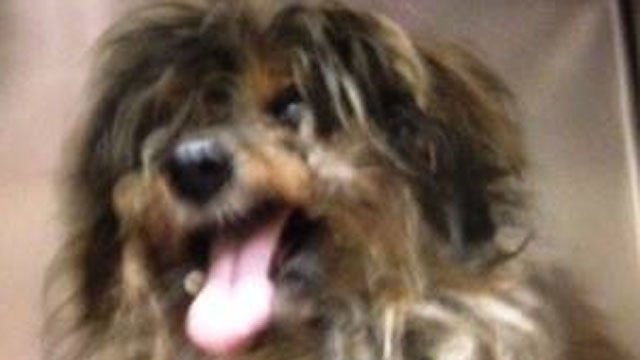 This dog needs a new home after being thrown from vehicle in Hartford. (Renee's Rescue Round-Up!)