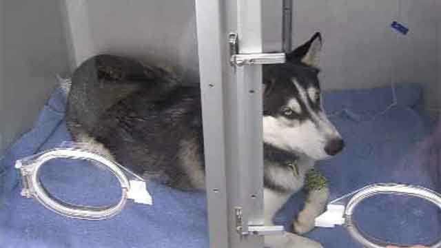 Max is recovering after being involved in a hit-and-run in Bristol (WFSB)