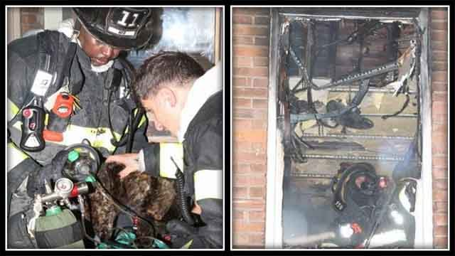 Man, cat rescued from burning Hartford building (Hartford officials)