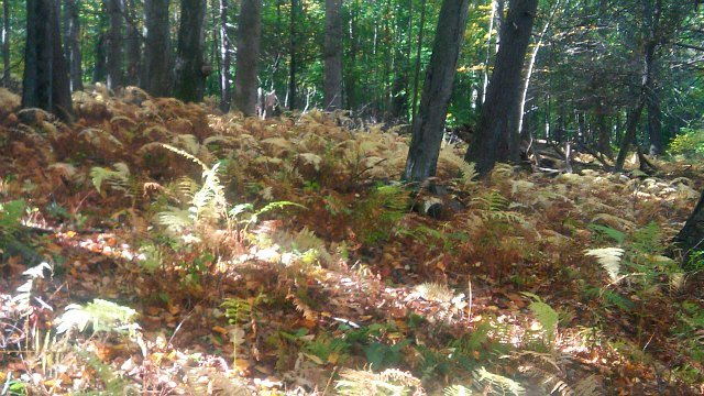 Ferns cover the forest floor at Hurd Park. (WFSB)