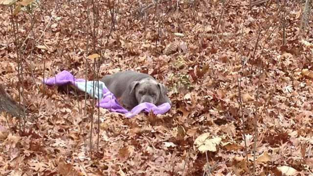 Police said the dog was laying on a pink blanket in a wooded area of East Road. (East Windsor)