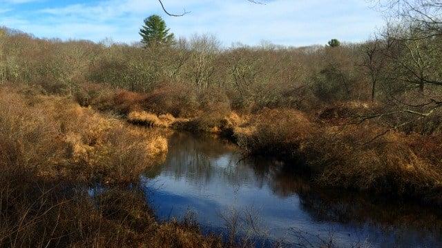 Little River as it flows through the preserve