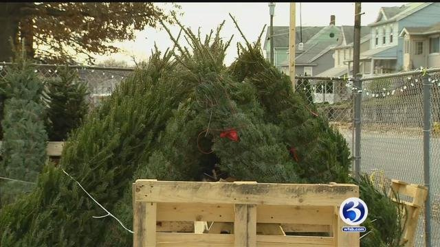 Christmas trees were stolen from  Saints Peter and Paul School in Waterbury. (WFSB)