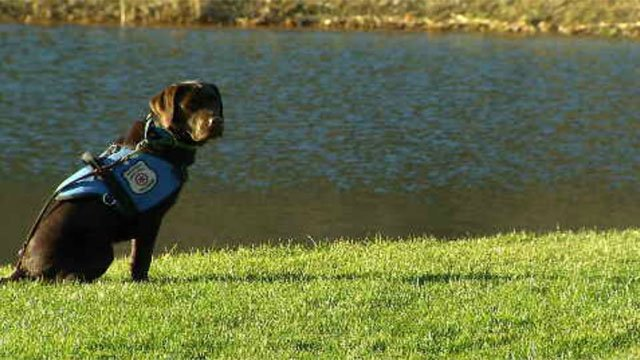 Diabetics receiving help from special dogs (WFSB)