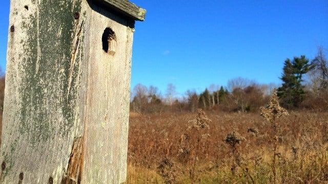Bodman Meadow at Walden Preserve