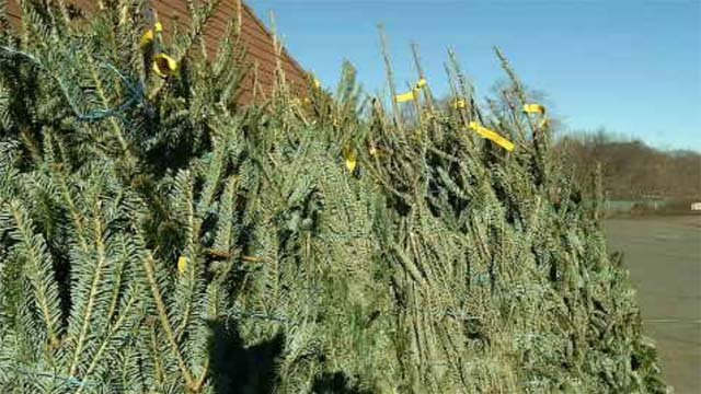 West Haven offering Christmas trees to families in need (WFSB)