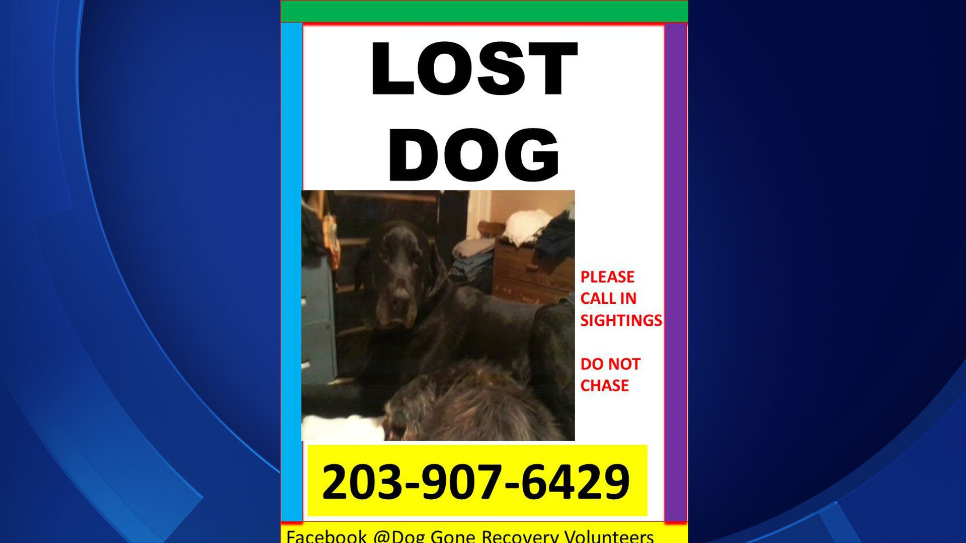 Dog Gone Recovery released this flyer to help locate Max.