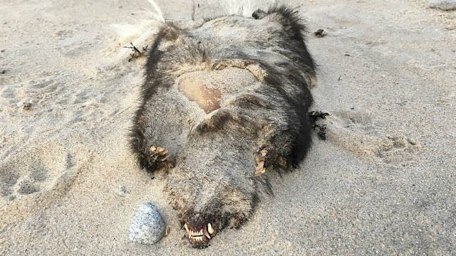 Experts weigh in on creature found on Old Lyme beach (Ryan Lee)