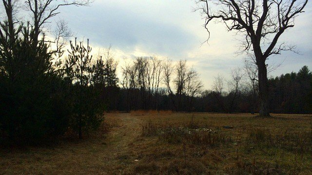 Here's what the perimeter of the old farm's hay field at Wagner Woods. (WFSB)