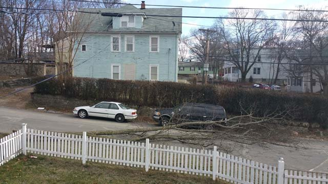 Wind brought down this tree in Waterbury. (Wanda Ruiz?/iWitness photo)
