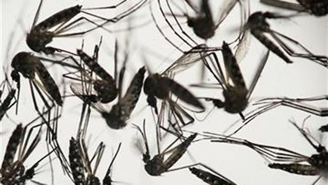 The second case of the Zika Virus in Connecticut has been confirmed (AP photo)