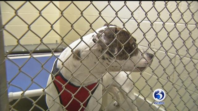 CT taskforce working on shelter protection laws and euthanizing fewer animals (WFSB)