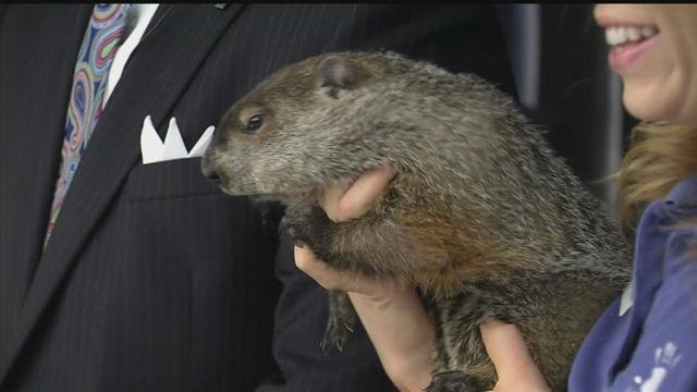 he Lutz Children's Museum in Manchester announced the passing of Chuckles VIII, which was the official groundhog for the state. (WFSB file photo)