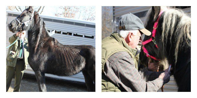 Dozens of horses, other animals seized from East Hampton breeder (The Department of Agriculture)