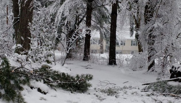 Heavy Snow brought down branches and even small trees. (@hybridpreneur1)