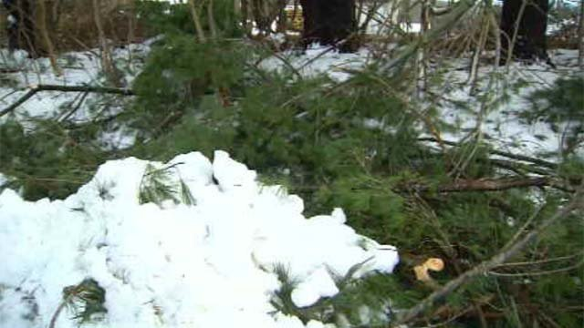 Friday's heavy wet snow stressed many trees, causing weak limbs and branches to snap off and fall. (WFSB)