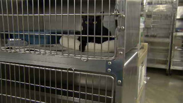 Animal control officers want to see tougher rules for importers and clear regulations of rescues and shelters statewide. (WFSB)