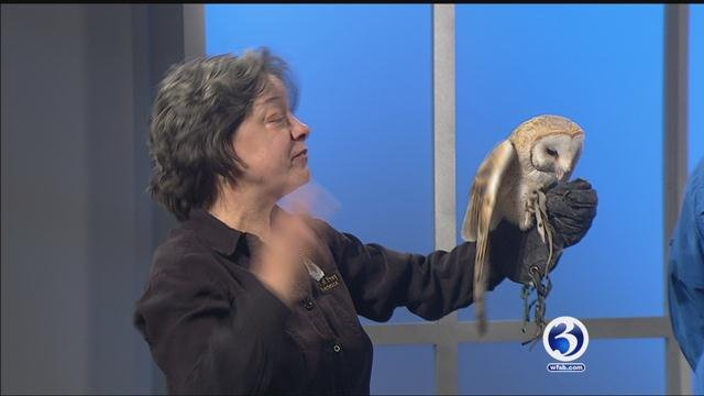 Oliver the owl shows off his skills. (WFSB)
