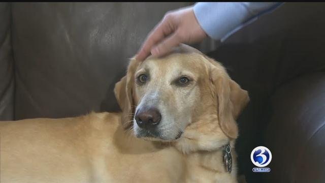 A new study shows sharing a bed with your pet could improve your sleep. (CBS News)