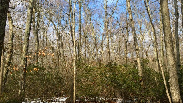 Cedar stand in the swamp beyond the trail. (WFSB)