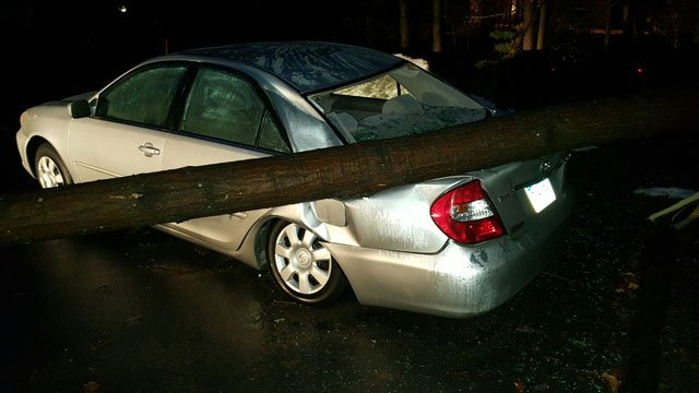 A tree came down in the parking lot of the UConn Health Center in Farmington. (Daniel Camacho/iWitness photo)