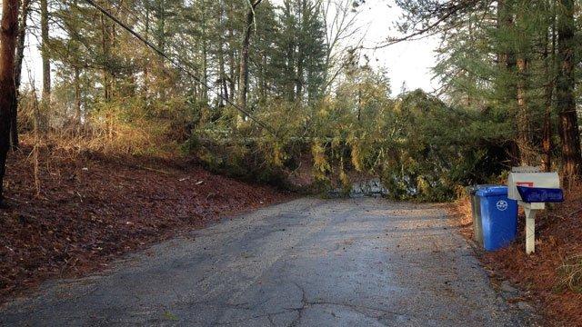 A tree lies across Ball Hill Road in Mansfield. (Andrew Utterback/iWitness photo)